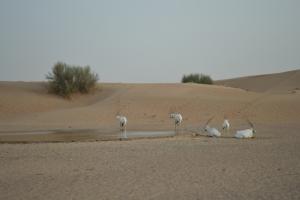 2012_Dubai 092