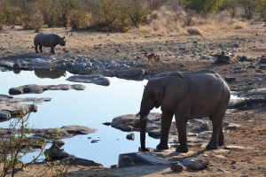 Dusk at the watering hole