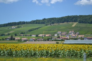 Fields of Sunflowers between Bern and Geneva.
