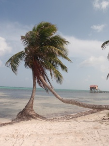 The beautiful sights of Ambergris Caye.