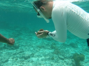 Snorkeling in Hol Chan